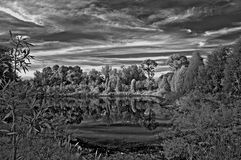 Dark And Moody. Wooded landscape located in Seminole, Florida (USA). Shot in infrared color and converted to black and white Royalty Free Stock Photo