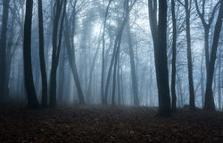 Dark moody forest Royalty Free Stock Image