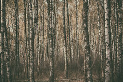 Dark moody forest Royalty Free Stock Photos