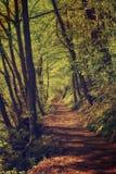 Dark moody forest Stock Photo