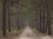 Dark moody forest with path through it. early dark morning walk royalty free stock photo