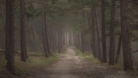 Dark moody forest with path through it. early dark morning walk stock photos