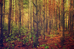 Dark moody forest Stock Images
