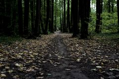 Dark moody misty heavy forest path with many trees royalty free stock photo