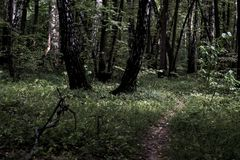Dark moody misty heavy forest path with many trees stock images