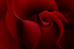 Dark moody red rose background Stock Photos