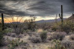 Dark, moody sunset in the Sonoran Desert. Dark, cloudy Sonoran Desert sunset with mountains and saguaro cactus stock photo