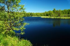 Dark moor lake in the green. Image of a moor lake in middle germany. How deep is this water Royalty Free Stock Photos