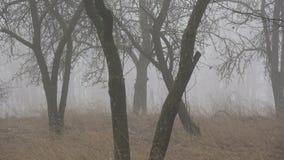 Dark morning mist in old derelict  garden with apple trees. Dark morning mist in old derelict farm ranch garden with apple trees stock video