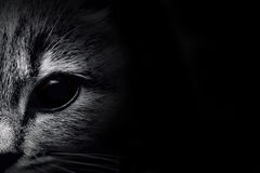 Dark muzzle cat close-up. front view Stock Images
