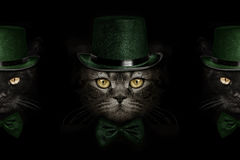 Dark muzzle cat  in green hat and tie butterfly Royalty Free Stock Photography