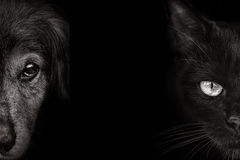 Dark muzzle spaniel dog and cat  closeup. front view Stock Images