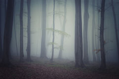 Dark mysterious enchanted Halloween forest Stock Images