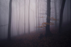 Dark mysterious fantasy forest with fog in autumn Royalty Free Stock Image