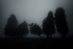 Dark and mysterious forest Stock Photo