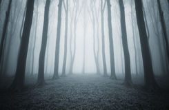 Dark mysterious forest with blue fog  on halloween Stock Photo
