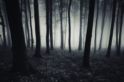 Dark mysterious forest with fog Royalty Free Stock Photos