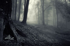 Dark mysterious forest with fog Stock Photos