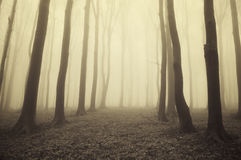 Dark mysterious forest with fog on halloween Royalty Free Stock Photo