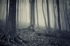 Dark mysterious forest with fog on halloween Stock Photos