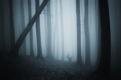 Dark mysterious forest with fog on halloween night. Dark mysterious forest with blue fog on halloween night royalty free stock photography