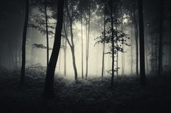 Dark mysterious forest on Halloween. Dark mysterious forest with fog. Surreal atmosphere in dark forest with fog. Foggy forest at night. Mysterious fairy tale royalty free stock photos