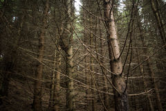 Dark and mysterious forest Royalty Free Stock Images