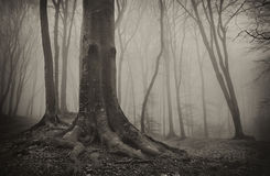 Dark mysterious forest with old tree and fog Stock Photography