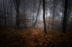 Dark mysterious forest with red leaves and fog on Halloween. Evening stock photo
