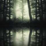 Dark mysterious forest reflection stock image