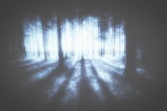 Mysterious moody forest Royalty Free Stock Photo