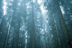 Dark Mystery Forest Stock Images