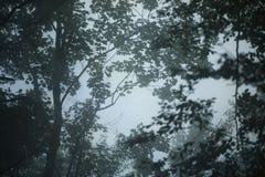 Dark foggy forest background royalty free stock photo