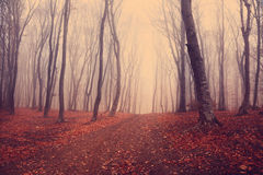 Dark mystic forest. During fall Royalty Free Stock Image