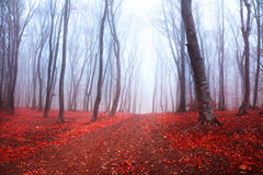 Dark mystic forest. During fall Stock Images