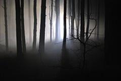 Dark night forest in a fog 05. Light in a dark night forest in a fog Royalty Free Stock Photos