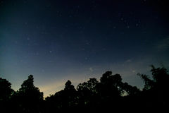 Dark night in forest with stars Stock Photo