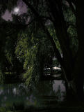 Dark night landscape. Weeping Willow tree, pond and party tent on a dark night Royalty Free Stock Photo