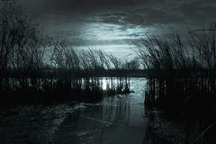 Dark night in the river with reeds reflects the light of the moo royalty free stock photos