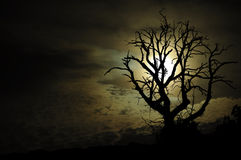 Dark night scenery. Withered tree black silhouette in night sky Stock Images