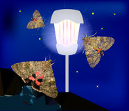Dark night sky with glowing lantern, brown moths and stars Royalty Free Stock Images