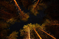 Dark night sky with many stars in pine forest royalty free stock photos