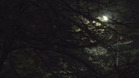 Dark Night With Snow.  stock footage