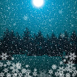 Dark night winter forest blue Stock Images