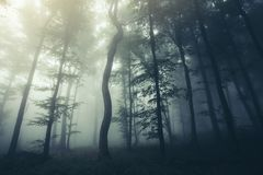 Dark night woods with scary fog stock photography