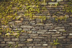 Dark old brown stone wall background Royalty Free Stock Image