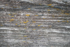 Dark old wooden board with yellow lichen Stock Photo