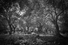 Dark olive creepy spooky scary forest Royalty Free Stock Images