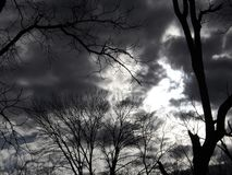 Dark Omen Sky. A spooky view of barren trees, in near black and white stock photography