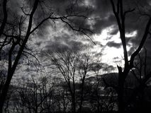 Dark Omen Sky 3. A spooky view of barren trees, in near black and white stock images